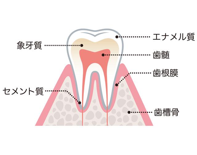 国分寺 恋ヶ窪 神山歯科医院 ドックスベストセメント療法とは